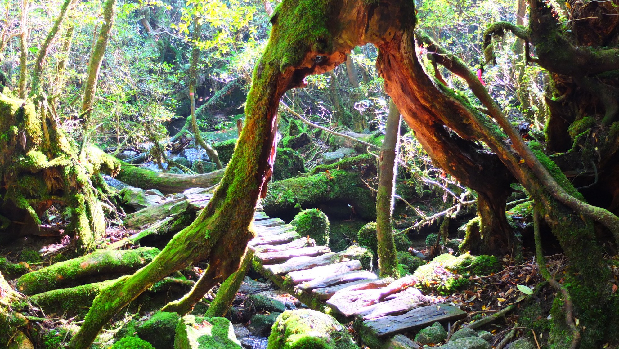 Shiratani Unsuikyo Nationalpark, Yakushima, Japan, Dominik Sommerer, Dominiks Welt